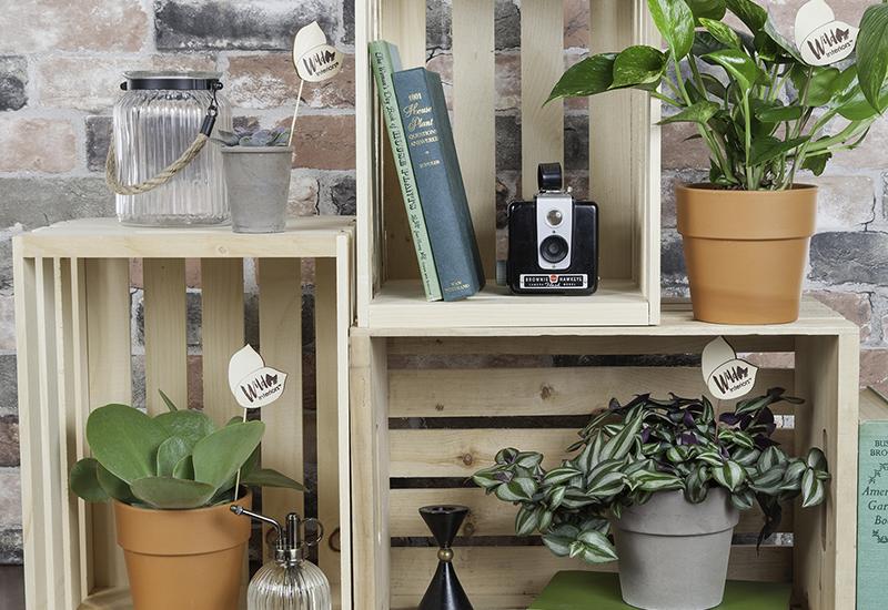 Wild Interiors on a Shelf