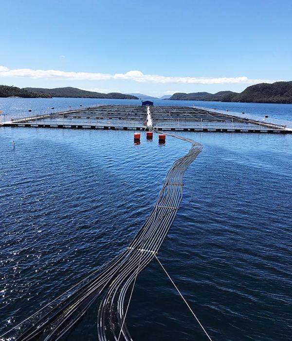 Verlasso Salmon Farming Nets