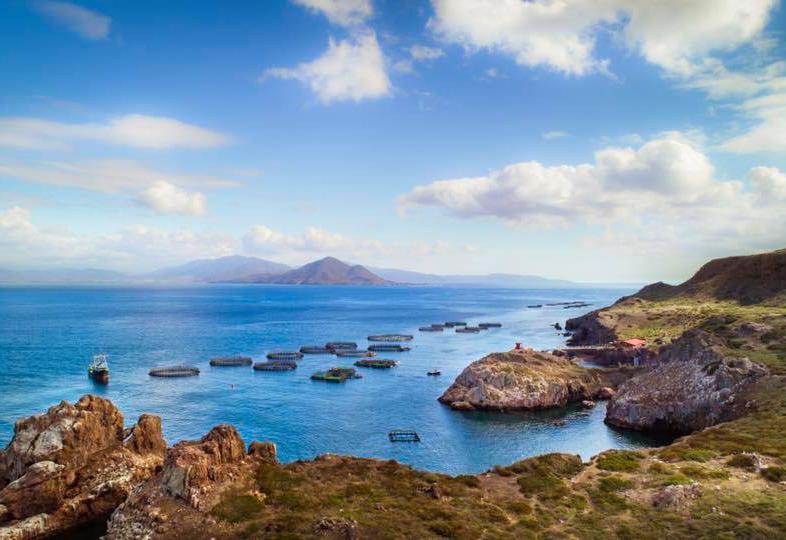 Pacifico Landscape
