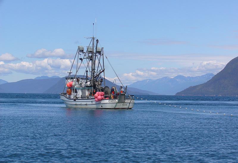 Wild Alaskan Salmon Run