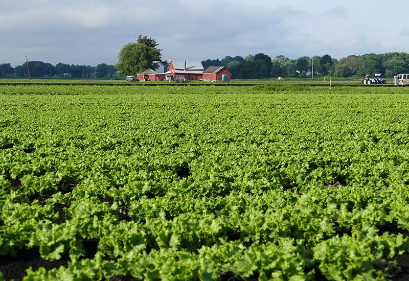 Local Produce Farm