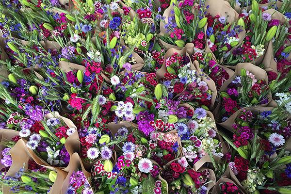 Sunny Meadows Flowers