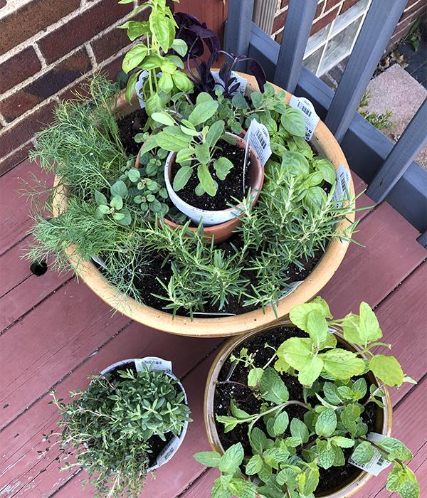 DIY Herb Garden Overhead Shot