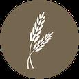 Whole grain icon