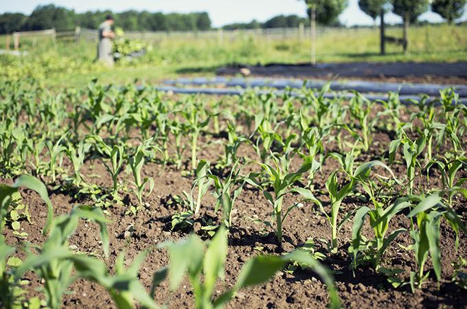 Greenfield Farms
