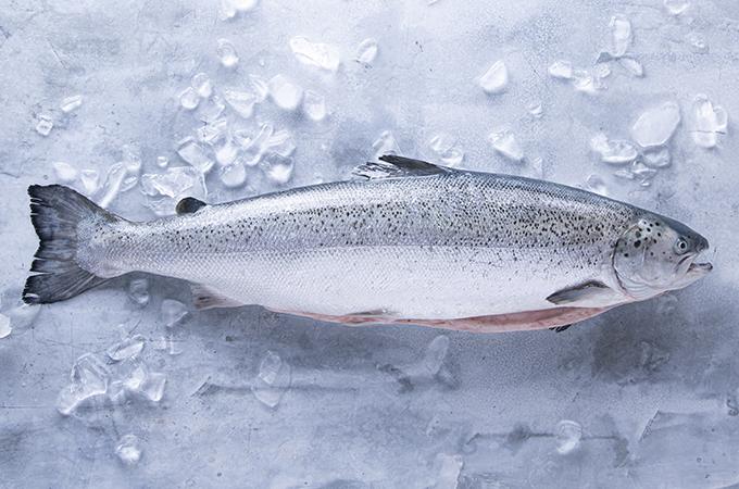 Kvaroy Arctic Salmon Whole